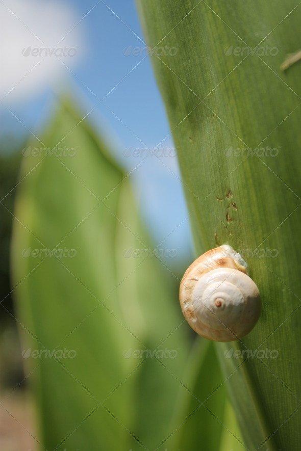 Snail climbing plant leaf.