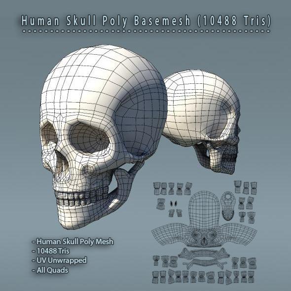Human Skull Polygon Mesh