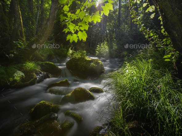 Sunlight filtered by the leaves of maple trees on a stream